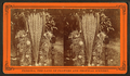 Blossom from the date tree, from Robert N. Dennis collection of stereoscopic views.png