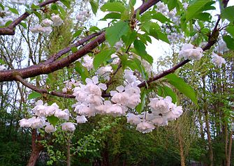 Blossoms 12.JPG