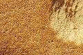 Bolet roux 14.jpg