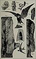 Boletim do Museu Paraense de Historia Natural e Ethnographia (1894) (20199019570).jpg