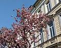 Bonn, Heerstraße -- 2018 -- 2245.jpg