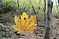 Borjomi Kharagauli National Park (8).jpg