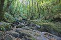 Bosque - Bertamirans - Rio Sar - 035.jpg