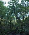 Bosque - Bertamirans - Rio Sar - 046.jpg