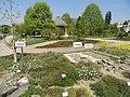 Botanischer Garten München-Nymphenburg - DSC07824.jpg