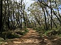 Braeside Trail - panoramio (3).jpg