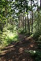 Bridleway through Stapleford Woods - geograph.org.uk - 1391462.jpg