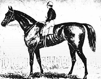 Briseis (Australian horse) - Image: Briseis