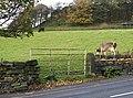 Broad Carr Gate - geograph.org.uk - 1572839.jpg