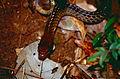 Brown Sipo (Chironius fuscus) (10511385133).jpg