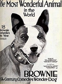 Brownie Century Comedies Wonder Dog - Aug 1921 EH.jpg