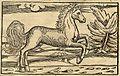 Bucephalus from Cosmographia (1544) by Sebastian Münster .jpg