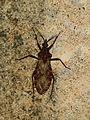 Bug - Flickr - treegrow (5).jpg
