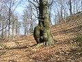 Bukowno, Poland - panoramio (2).jpg