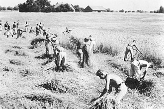 Reich Labour Service - RAD members working in the field, East Prussia, 1938