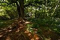 Burton Bushes IMG 1365 - panoramio.jpg