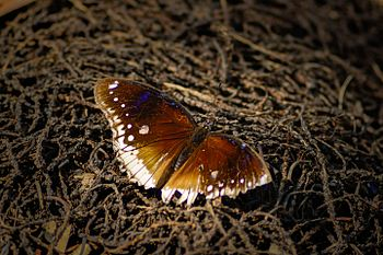 Butterfly on roots.jpg