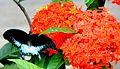 Butterfly type.jpg