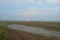 Câmp semănat, zona Boi Negri, Bordei Verde, judeţul Brăila.PNG