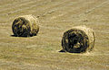 CSIRO ScienceImage 4017 Baled hay rolled Murrumbidgee Irrigation Area near Griffith NSW.jpg