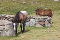Cabalo no alto da Coma. Andorra 294.jpg