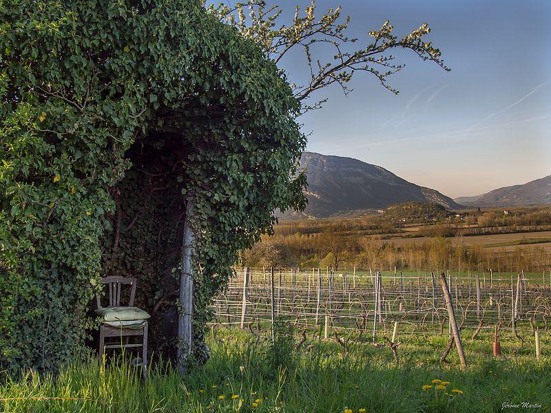 Cabane de vigne à Parissieu