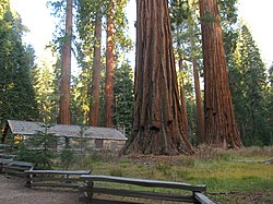 Cabin in Mariposa Grove of Sequoia - panoramio.jpg