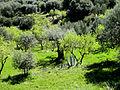Cactus entre árboles verdes - Guadalupe Cervilla.jpg