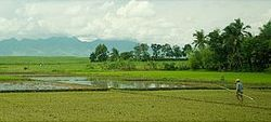 Rice fields showing a mountain view taken from the Cadiz City highway