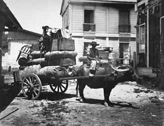 Carabao - Carabao cart in the Philippines (c. 1899)