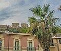 Castello Russo con Palma.jpg
