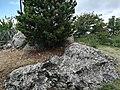 Castello di Canossa 53.jpg