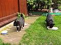 Cat37 (17178613582).jpg