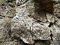 Cellular patterns in magnesian limestone - geograph.org.uk - 1530505.jpg