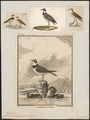 Charadrius hiaticula - 1700-1880 - Print - Iconographia Zoologica - Special Collections University of Amsterdam - UBA01 IZ17200217.tif