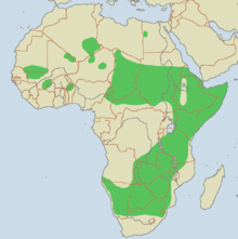 Gepardens utbredningsområde i Afrika