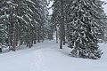 Chemin de randonnée vers la cabane du Carroz - panoramio (6).jpg