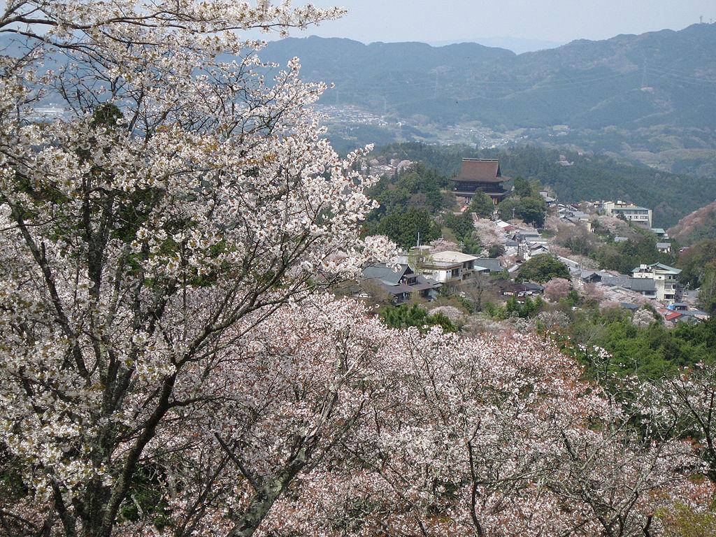 Cherry blossoms at Yoshinoyama 08