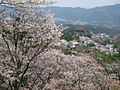 Cherry blossoms at Yoshinoyama 08.jpg