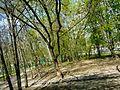 Chertanovo Severnoye District, Moscow, Russia - panoramio (41).jpg
