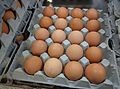 Chicken eggs in tray.jpg