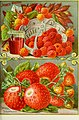 Childs' rare flowers, vegetables and fruits for 1895 (1895) (14595165747).jpg