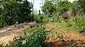 Chittanda Chola Forest - panoramio (11).jpg