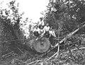 Choker setters sitting on log, Walville Lumber Company, ca 1919 (KINSEY 738).jpeg