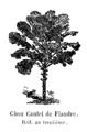 Chou Caulet de Flandre Vilmorin-Andrieux 1904.png