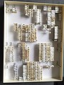 Chrysomelidae collection, Natural History Museum, London 246.jpg