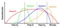 Ciclinas y ciclo celular.png
