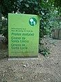 Cirerer de santa Llúcia del parc de l'Oreneta P1510571.jpg