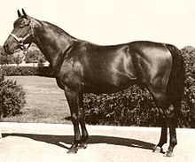 List Of Leading Thoroughbred Racehorses Wikipedia