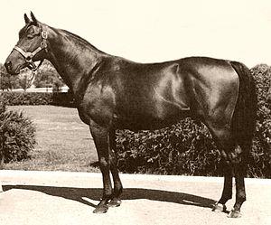 Citation (horse) - Image: Citation (USA)